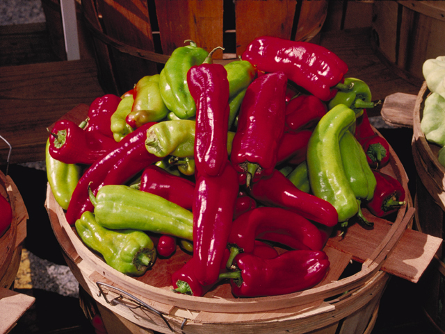 Some fresh cubanelle peppers that didn't get eaten by bugs, ready for shipment or sale