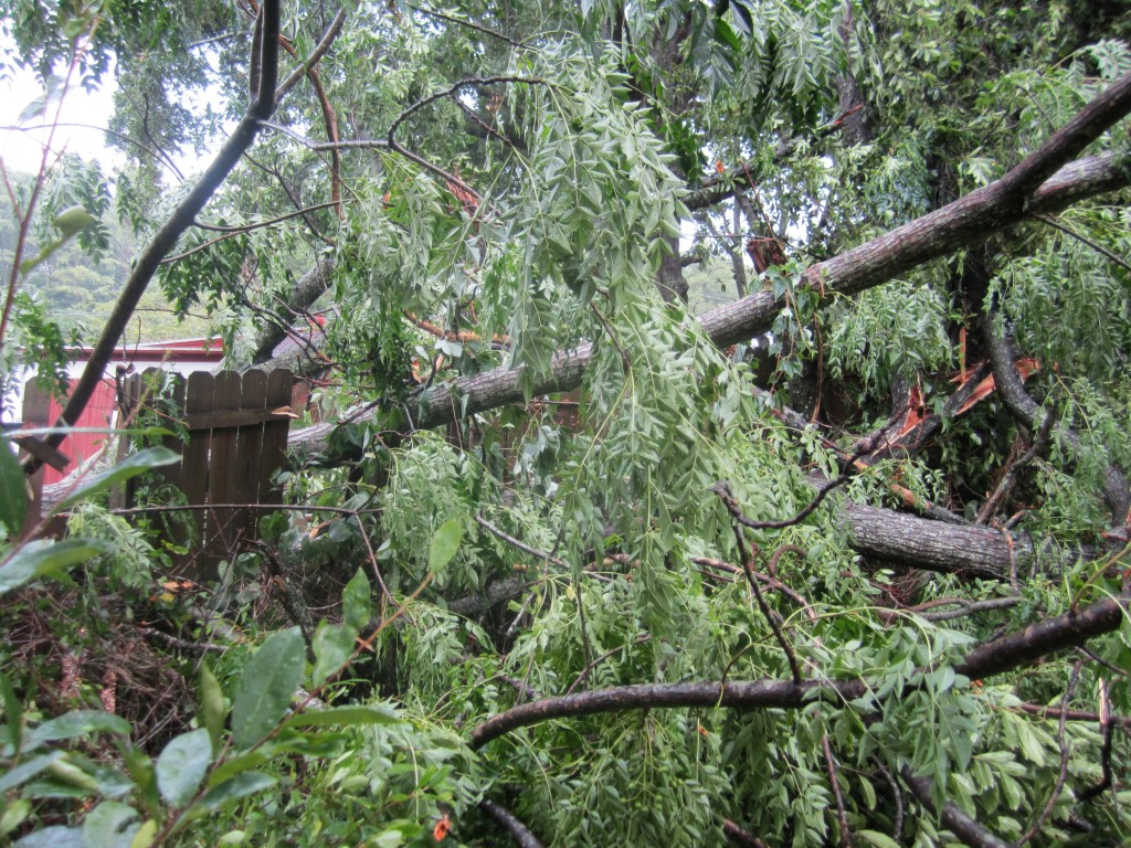 A tree goes down in the back yard, taking parts of the fence and smaller trees with it.